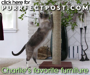 Charlie's favorite furniture is the Purrfect Post